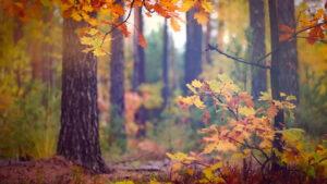 Φθινόπωρο στο δάσος